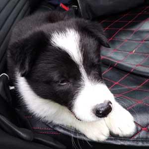 transporte de perros