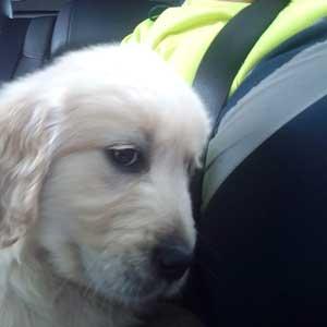 taxi para perros