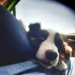 traslado de perros