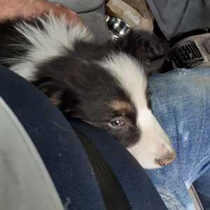 transportar mascotas sin jaula