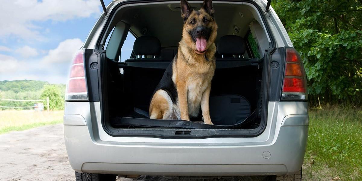 Precio del transporte de mascotas en España