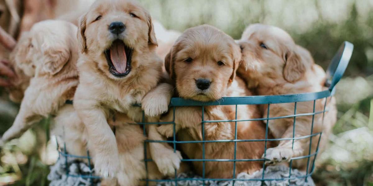+380632919316: Teléfono estafa con cachorros por Internet