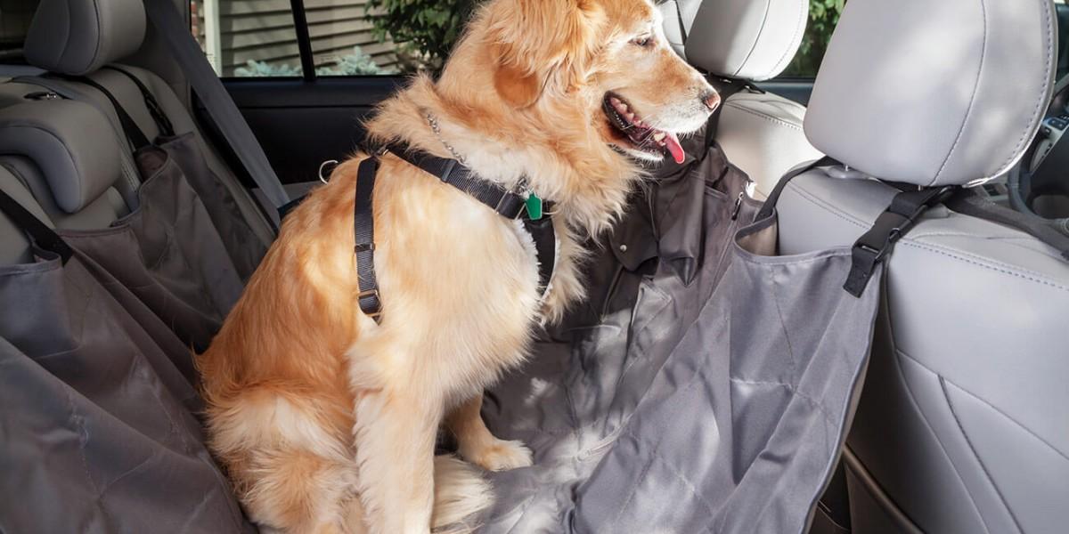 Transporte de perros: cómo hacerlo bien